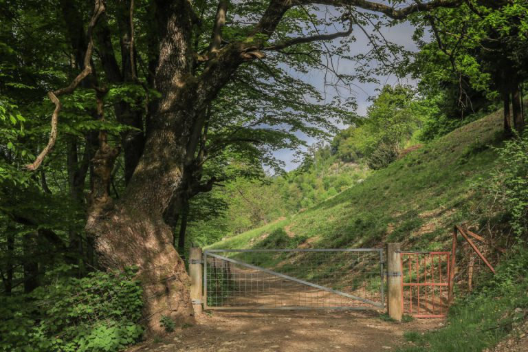 Kreisweg Vintgar - Hom Foto: Miro Zalokar
