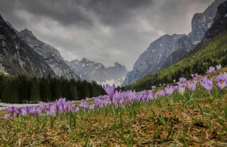 Krma pomladi