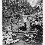https://www.kamra.si/mm-elementi/item/razglednica-slap-v-vintgarju-pozimi-1905.html